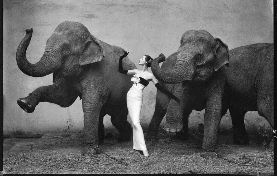 Dovima with the Elephants