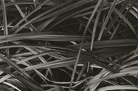 Paul Strand (1890-1976), Lily Leaves, Winter, Orge