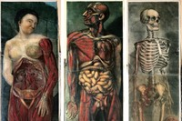 Three plates from the first full-colour anatomical atlas – J