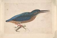 A Kingfisher on a Branch, Jacques Le Moyne de Morg