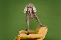 Photography by William Wegman