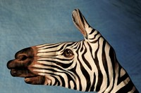 Zebra by Guido Daniele