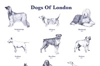 Dogs of London, 2008