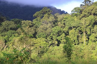 Lowland_forest_in_Mt._Leuser_NP_(8187201955)