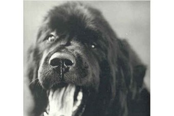 From Gentle Giants: A Book of Newfoundlands, 1995