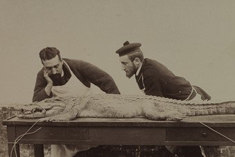 Unknown Photographer, Crocodile Autopsy, 1880s