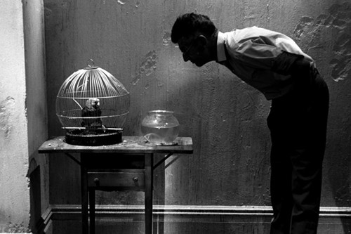 Samuel Beckett Looking at Parrot, New York, 1964