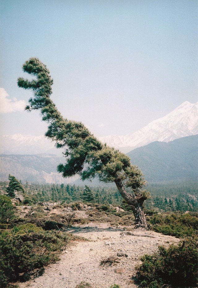 Dino, Some Windy Trees Photography by Vincent Delbrouck