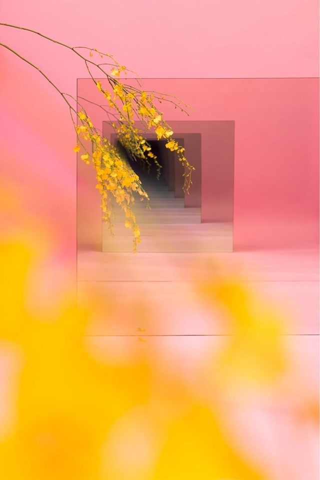 Pink_with_Yellow_web2