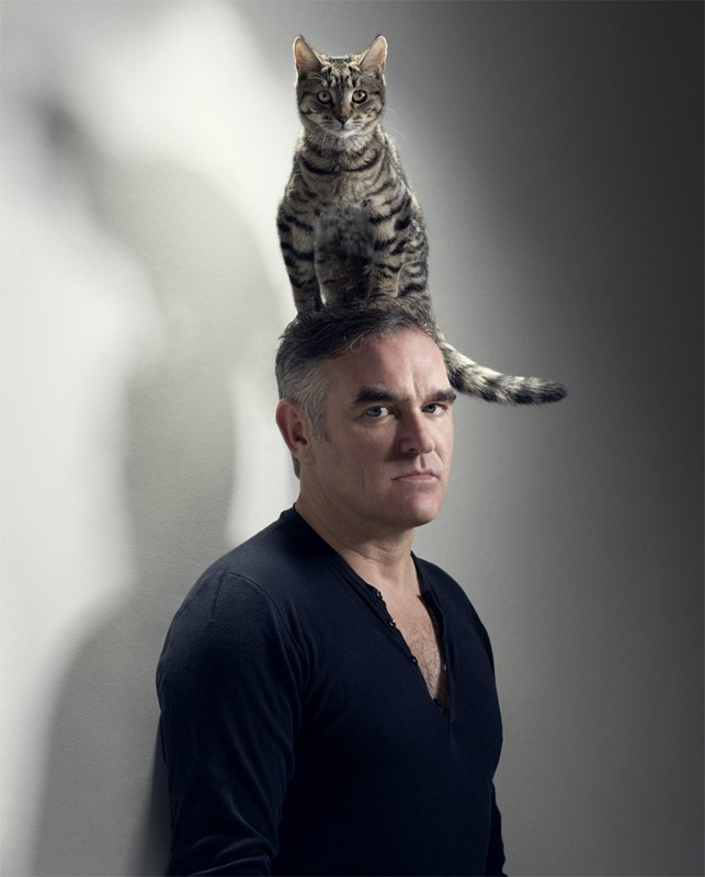 Image result for morrissey head cat