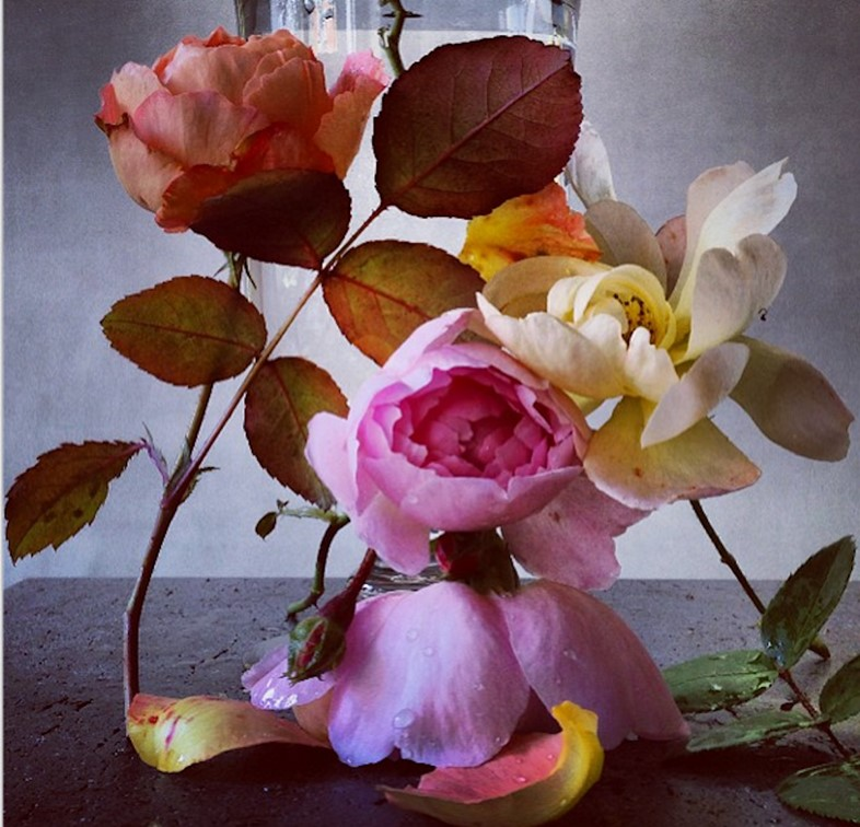 Roses from my garden by Nick Knight (via Instagram)