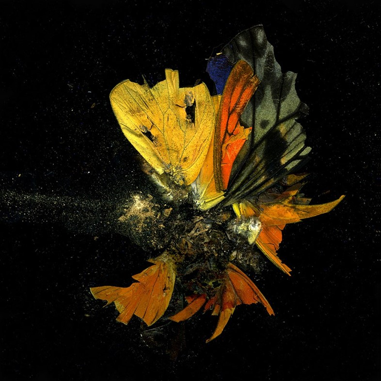 Insecticide, 2009, Mat Collishaw