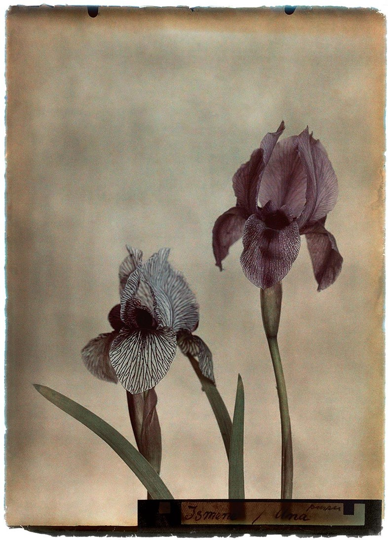 Silent Beauties, photography by Leendert Blok, Hatje Cantz