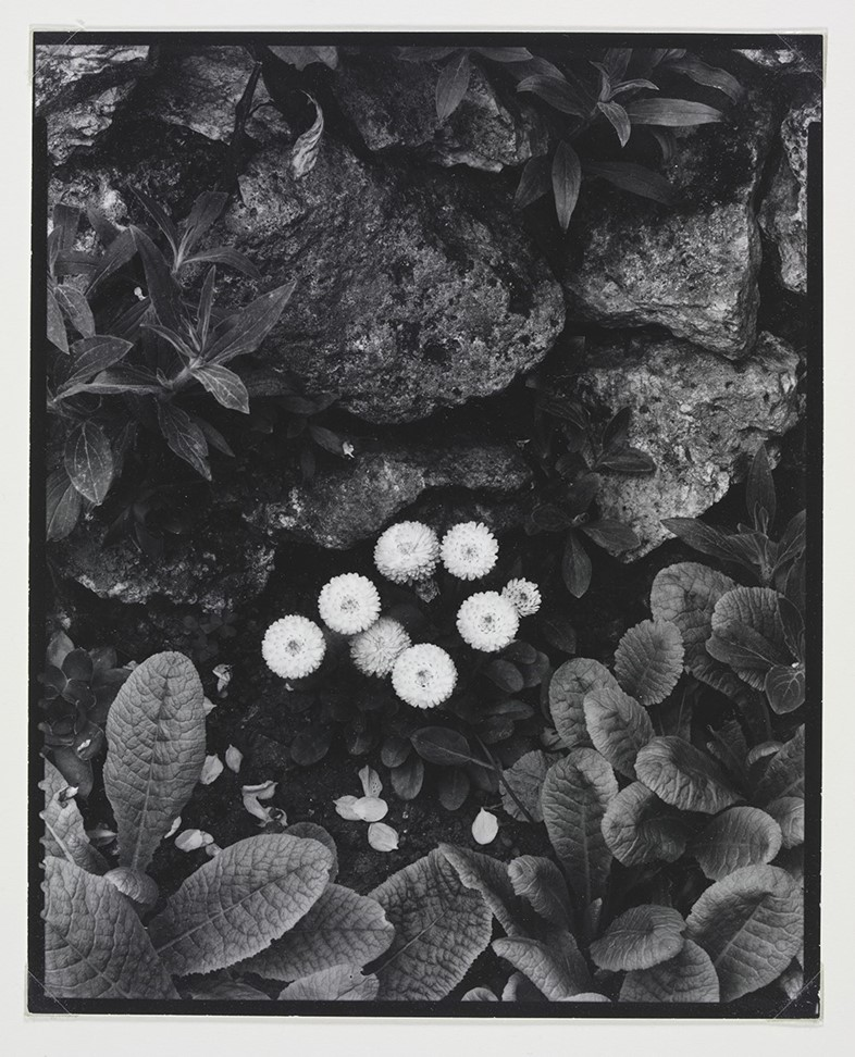 Paul Strand (1890-1976), The Happy Family, Orgeval