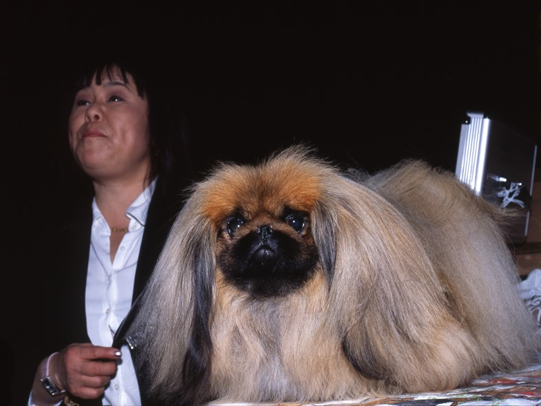 16_Crufts_UK_2005