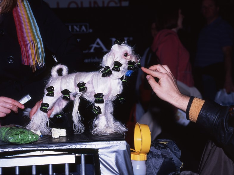 12_Crufts_UK_2009