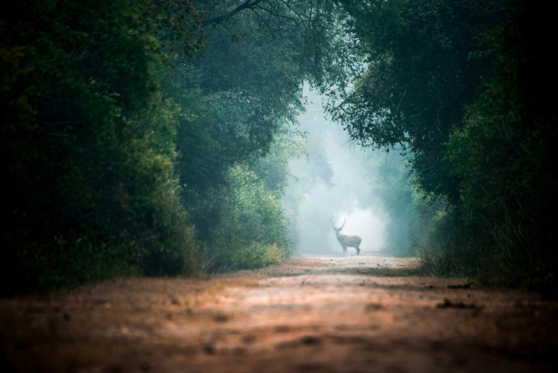 Sabr Dri Photography, The Deer on the Road, 2016.