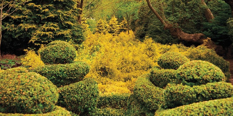 Pages-106-107-Yellow-Garden
