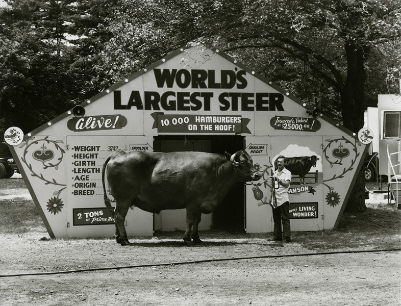 World's Largest Steer, Saratoga Springs, New York,