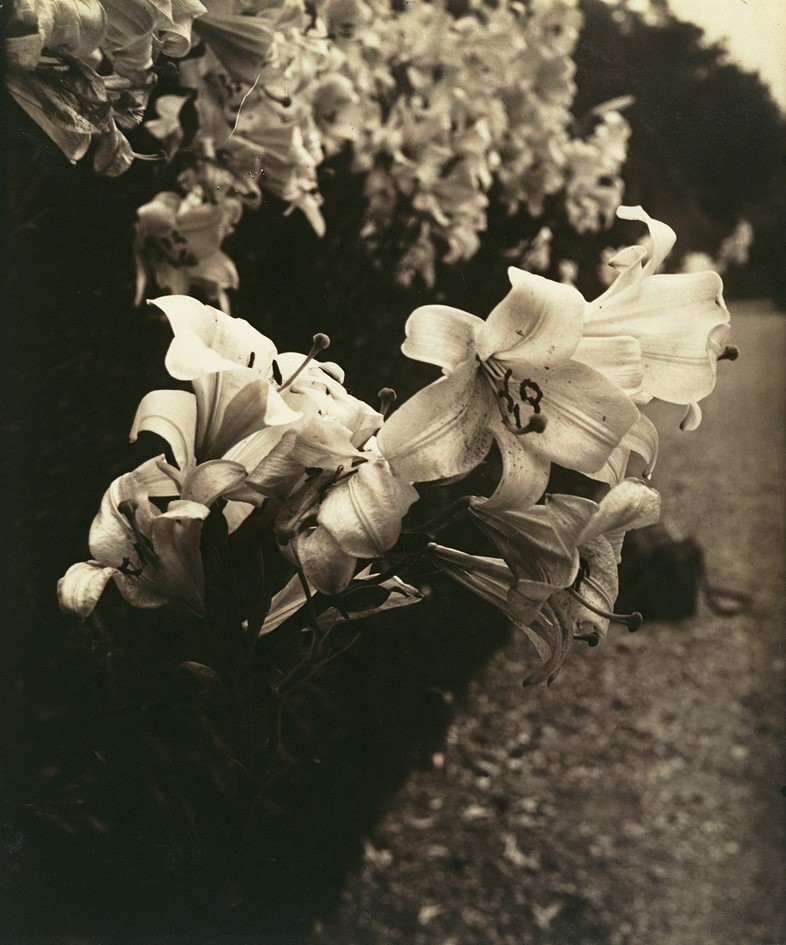 ITG_284_Atget_Lilies