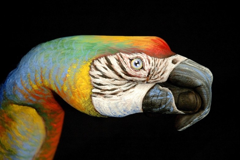 Parrot by Guido Daniele