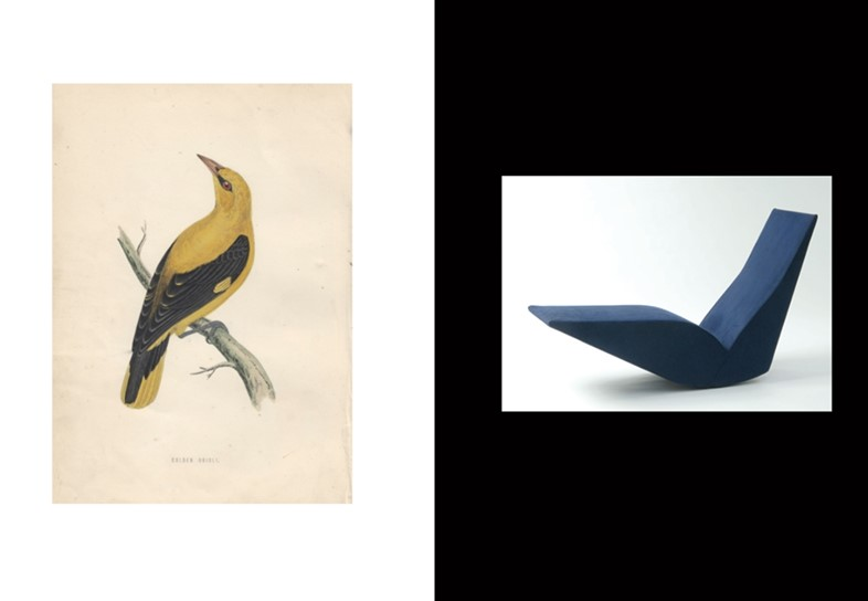 (L) Golden Oriole coloured engraving by Alexander Francis Ly