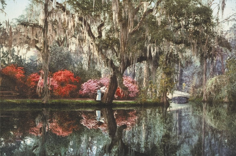 Charleston, Magnolia-on-the-Ashley, photochrom, Anonymous