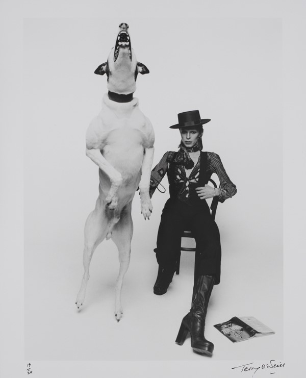 David Bowie in promotional shoot for Diamond Dogs (1974)