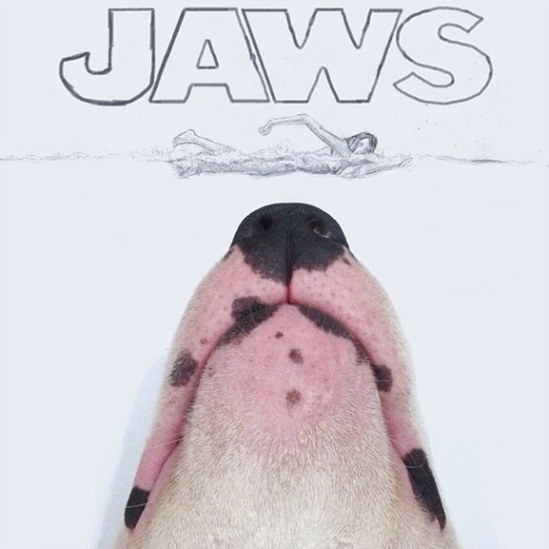 Jaws the Bull Terrier
