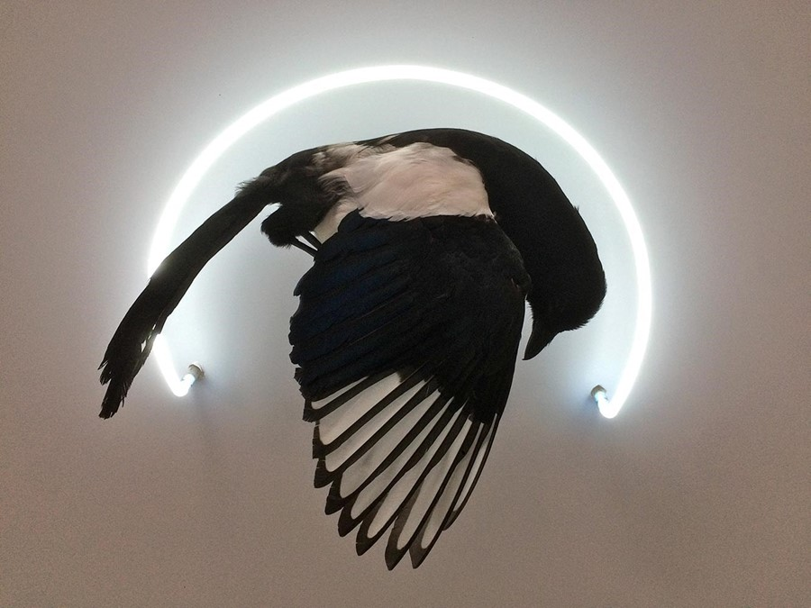Five Marvellous Modern Taxidermy Artists